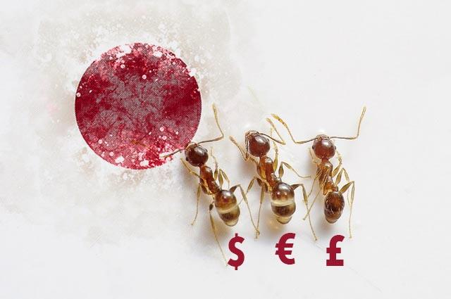 Hormigas japonesas